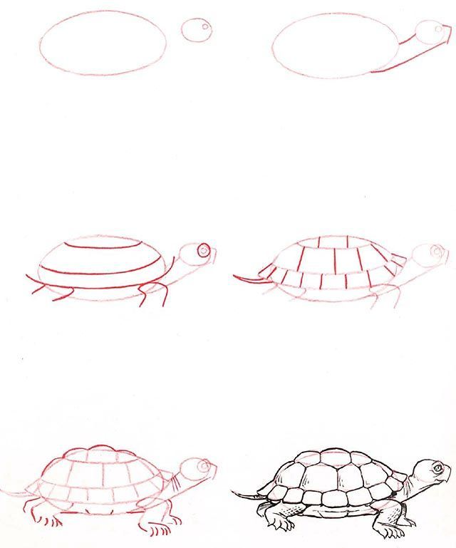 Learn to draw Tortoise