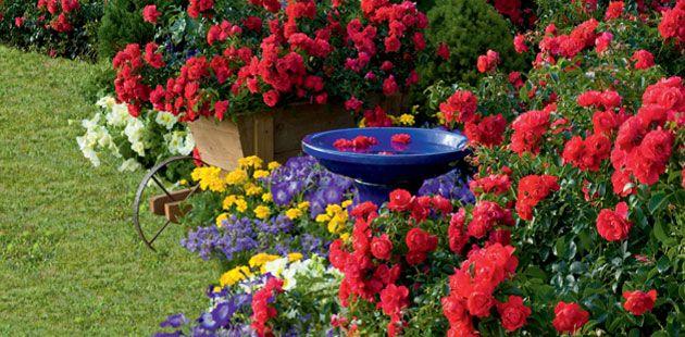 Simple Rose Garden: 1665 Best Enjoy Flower Gardening Images On Pinterest