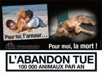 L'abandon tue 100 000 animaux par an