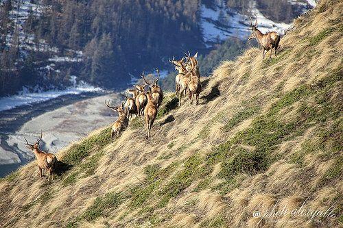 Parco Nazionale Orsiera Rocciavrè, Roure #piedmont #piemonte #landscape #italy #italia #alps #mountains #torino #asti #alessandra #cuneo #novara #vercelli #biella #verbania #cusio_ossola #monviso #monte_rosa #gran_paradiso #rocciamelone #argentera #langhe #roero #canavese #tanaro #lombriasco #sangone #po_river #ticino #curone #scrivia #lago_maggiore #maggiore_lake #roure