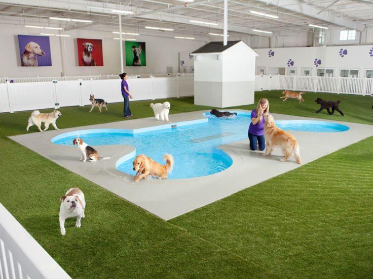 JFK's $48M Animal Terminal Is Cushier Than What Humans Get