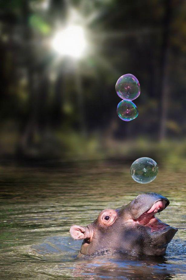 Дню рождения, смешные картинки о пузырях