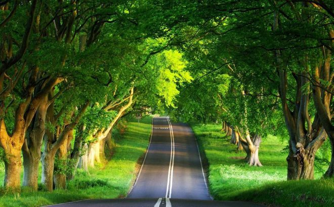 Short Essay On Importance Of Trees in Hindi Language ped lagao