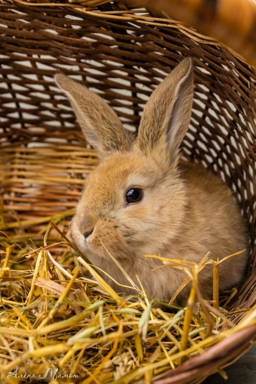 """llbwwb: """" For the bunny lovers:) by Алёна Мамот. """""""
