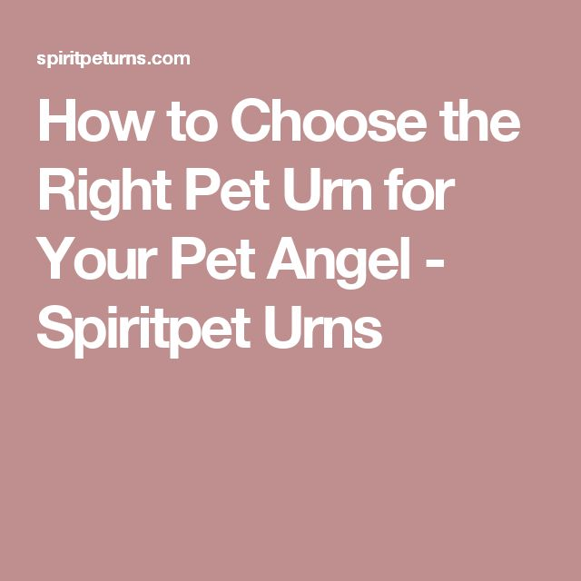 How to Choose the Right Pet Urn for Your Pet Angel - Spiritpet Urns