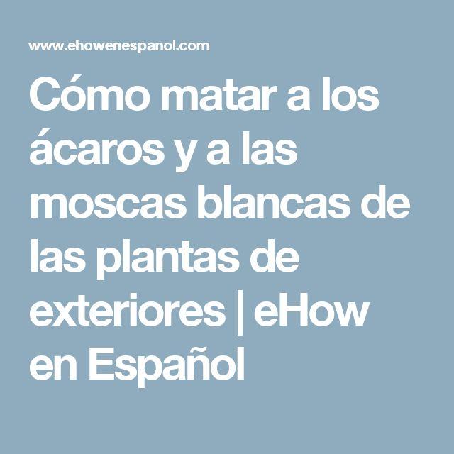 Cómo matar a los ácaros y a las moscas blancas de las plantas de exteriores   eHow en Español
