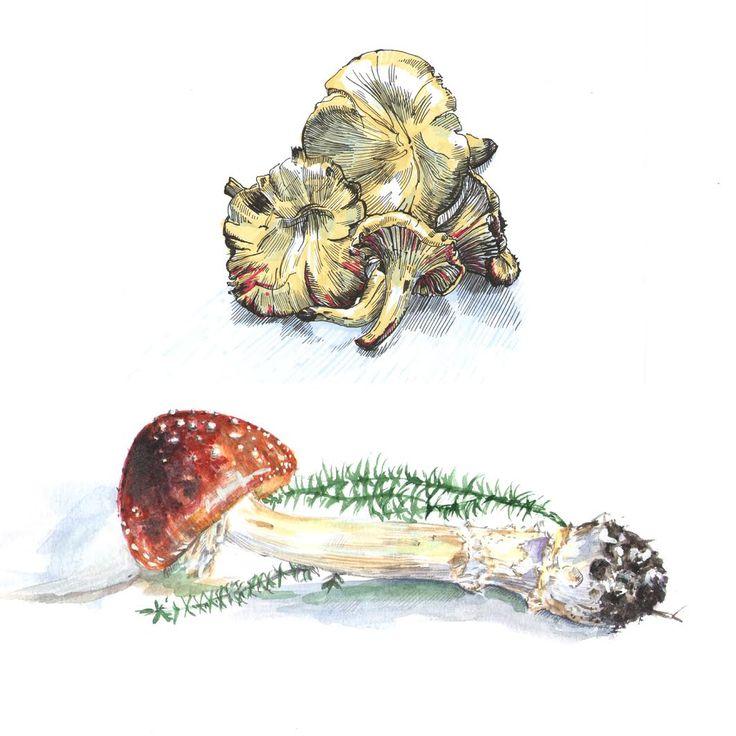 Mushroom sketches