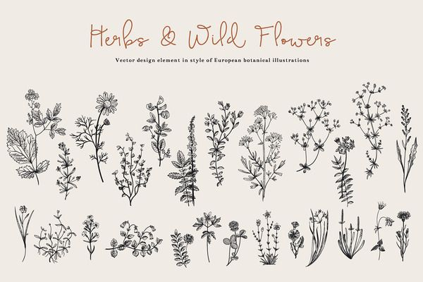 Herbs & Wild Flowers. Set - Illustrations - 1