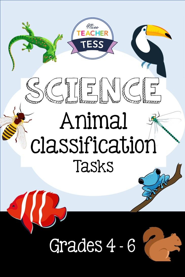 48 animals cards and 2 handouts for classificiation task