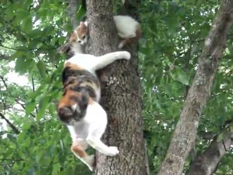 With her baby kitten stuck high in a tree, this mama climbs to the rescue.