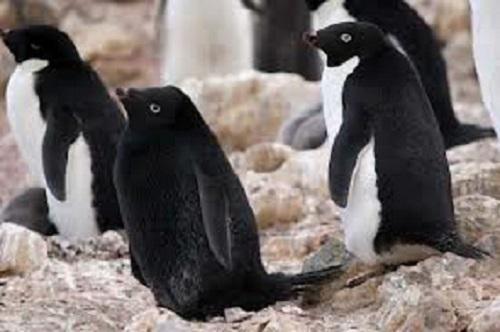 【画像】 アルビノの逆!全身黒色「メラニズム」の動物たちが神秘的すぎると話題に