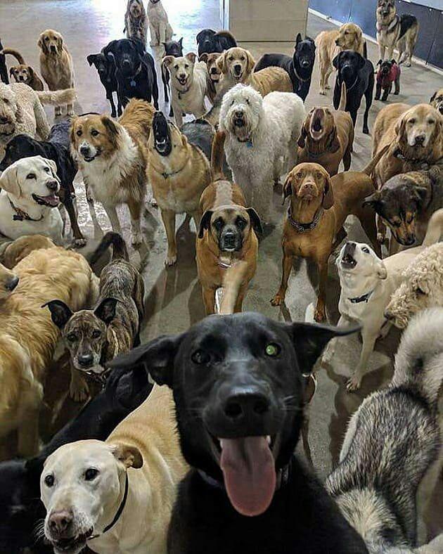 Esviral Un Perro Labrador Llamado Rouge Y Una Manada De Canes Han Despertado La Curiosidady El A Perros Graciosos Guarderia Perros Perros Y Cachorros Lindos