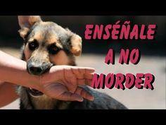 4 Errores que Cometes al Entrenar a tu Perro que Arruinan su Obediencia - YouTube