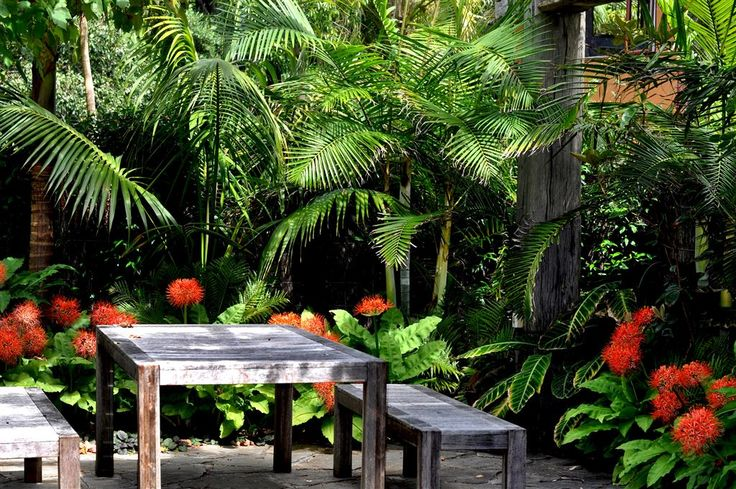 311 best projects to try images on pinterest tropical for Small garden designs nz