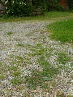 Désherbant naturel à base de vinaigre trouvé sur le blog de http://www.le-jardin-de-jenny.fr Pour 1 litre de vinaigre, ajoutez 2 cuillères à café de liquide vaisselle et pulvérisez sur les mauvaises herbes. L'acide acétique dans le vinaigre agit comme herbicide et le liquide vaisselle permet un meilleur contact avec les feuilles. A faire par temps ensoleillé