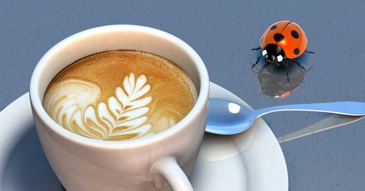 Günde 5-10 fincandan fazla kahve tüketimi anksiyete (kaygı) ve panik atak riskini arttırmaktadır. Özellikle hamilelerin 1 fincandan fazla tüketmemeleri gerekiyor.  www.aydinkosus.com www.drnerminkosus.com