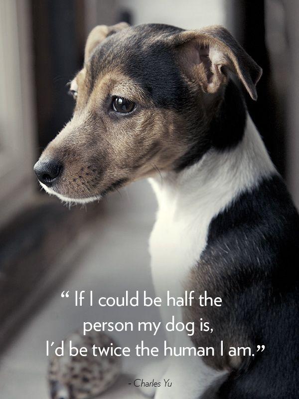 """If I could be half the person my dog is, I'd be twice the human I am."" —Charles Yu   - CountryLiving.com:"