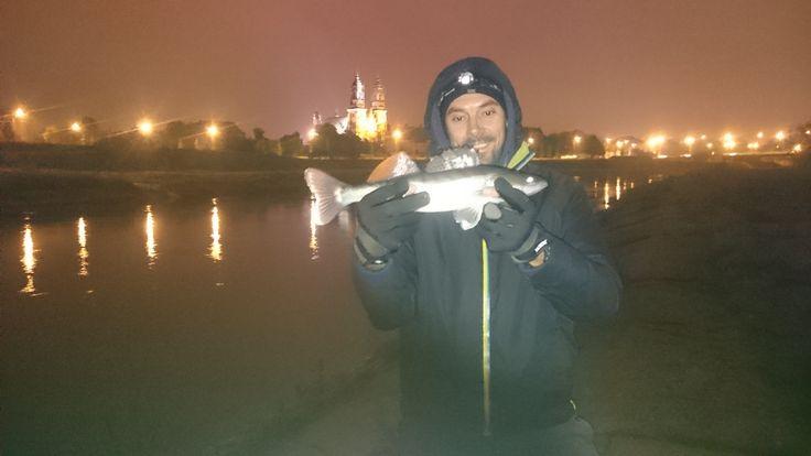 Zander from Warta River in Poznań Poland