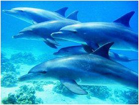 Ausflüge in Hurghada,Schwimmen mit Delfinen in Hurghada am Roten Meer.