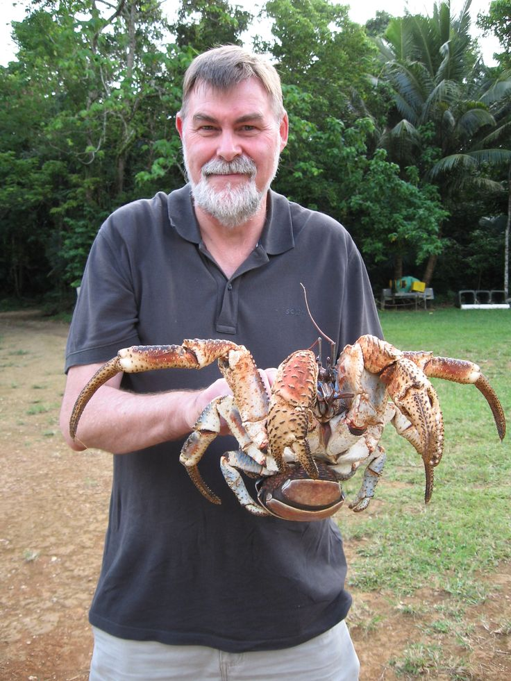 Doug Brown meets a local robber crab. Christmas Island's famous robber crabs are the world's largest terrestrial invertebrate.