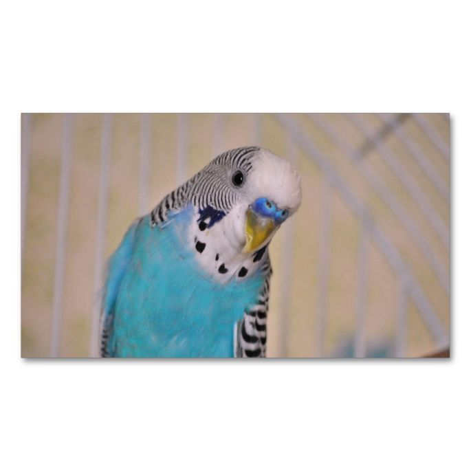 2168 best photographer business cards images on pinterest blue parakeet double sided standard business cards pack of 100 make your flashek Choice Image