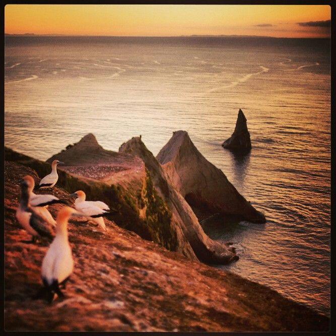 #travel #photography #newzealand #wildlife #nature #bird #sunrise