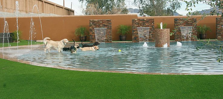 The pool has state of the art commercial grade equipment enabling the pool to stay sparking clean, no matter how many dogs, 365 days a year. The splash pad and waterfalls are pre-programed to go on 6 times a day. The pool is open from 7am-7pm for the dogs enjoyment. At 10:30-1:30 the staff will always be in the pool swimming with the dogs and giving out surfboard rides to all those who want them. (7 months of the year, weather permitting)