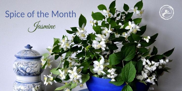 Jasmine - Spice of the Month