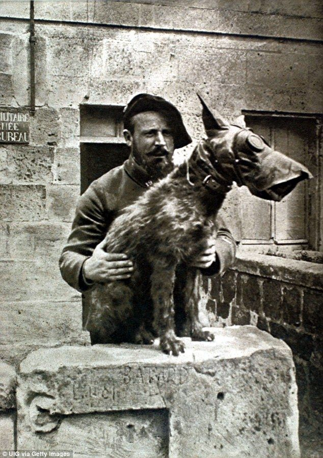 A French soldier holds on to a dog wearing a gas mark during the First World War