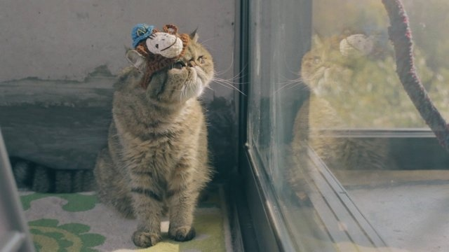 Mailchimp cat hats. Pure awesomeness!