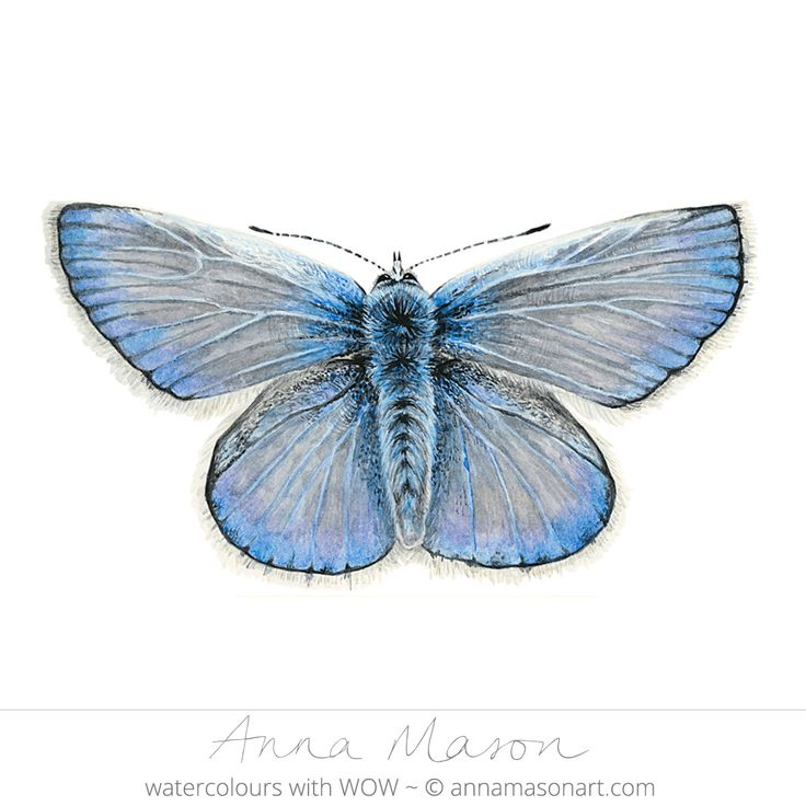 "Common Blue Butterfly ©2010 ~ annamasonart.com~ 23 x 23 cm (9"" x 9"") #AnnaMasonNewSite"