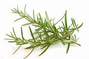 Rosemary. Rosemary has a long history of being used to counteract bad spells and block their powers. Hand fresh or dried sprigs of rosemary in your home to dispel witchcraft and evil plots. Carry the leaves in a red cloth bag for protection. Season food with dried rosemary to improve your memory and increase your clarity. Rub the oil into yellow candles and light on Thursday to improve your study habits and grades.