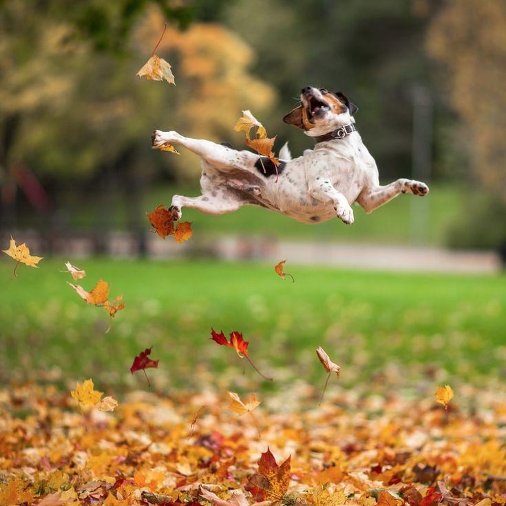 Best Photos of the Month, November 2014, Inspiration, Photography, Artnaz.com