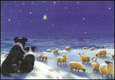 """Border Collie Christmas Cards """"shepherds watch"""""""