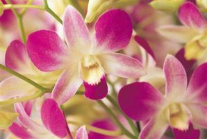 It is easy to make your own orchid food.