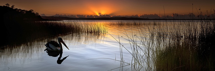 Elanda Point Noosa Everglades