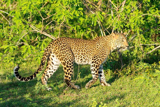 Sri Lanka. De afgelopen drie weken maakten we een geweldige reis doorSri Lanka. Sri Lanka is een relatief klein eiland, maar de afwisseling is enorm. Van groene bergen tot tropische stranden, van oude tempel…