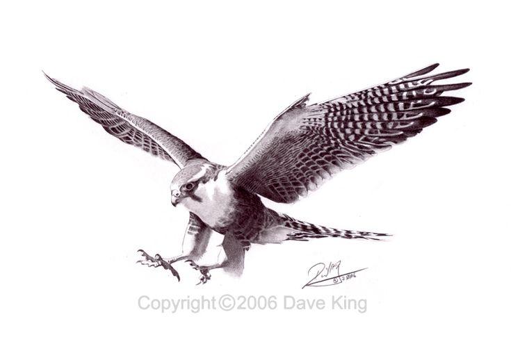 falcon tattoo | Peregrine Falcon Tattoo Phoenix wings - tattoo by