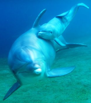 dolphin baby - Google Search
