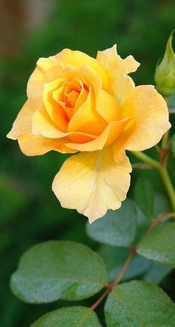 Per tu Rosita estimada 11/11/16 epd  et plorem y estimem juanita ,isidre i jordi.