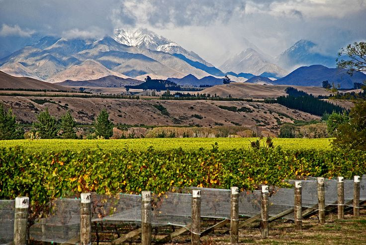 Marlborough, the largest wine-growing region in New Zealand, is seeing booming investment in its forestry plantations and vineyard land as wine producers spend millions buying-up tracts of land there. According to New Zealand news site Stuff, figures from the government's Overseas Investment Office show 20,766 hectares of land in Marlborough