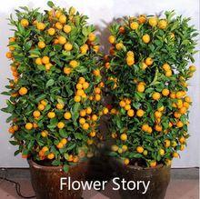 20 Mini Maceta Comestible drawf Naranja Semillas de Bonsái-Frutas, Mandarina Cítricos Fácil de cultivar(China (Mainland))
