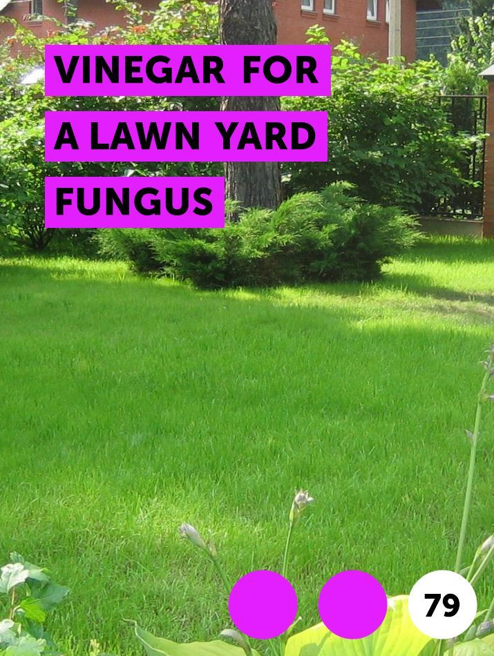 Learn Vinegar For A Lawn Yard Fungus How To Guides Tips And Tricks Lawn Fungi Lawn Mower