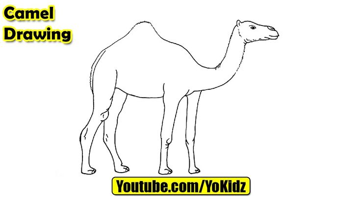 How to draw CAMEL for kids  Camel Drawing from YoKidz  #YoKidz #Drawing #PencilDrawing #Generaldrawing #Like4like #Likeforlike #Share4share #Shareforshare #Draw #Blackandwhite #Camel #DrawCamel