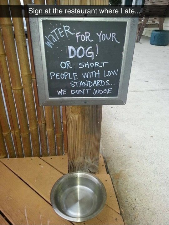 Some Water For Your Dog #lol