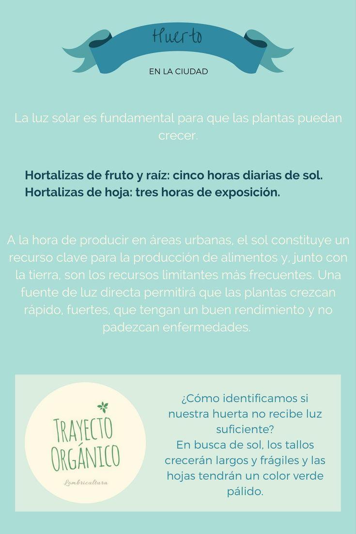Huerto Urbano: La importancia del SOL en el cultivo de hortalizas en maceta.
