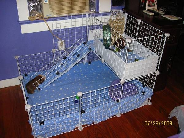 69 best images about guinea pigs essentials on pinterest for 2 story guinea pig cages for sale