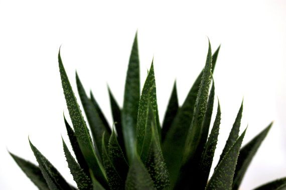 16x24 print • waterless houseplant by Plum and Cedar on Etsy