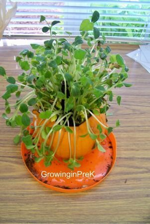 "Open a pumpkin.  Leave the ""guts"" inside.  Add some soil, and just a little water.  Look at all of the pumpkin plants that we'll have. Great to do with kids."