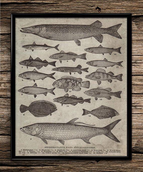 Vintage Types Of Fish Vintage Prints Office Decor Home Decor Printable Wall